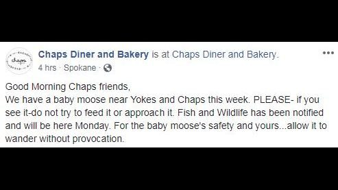 Chaps Diner warns customers about baby moose in the area