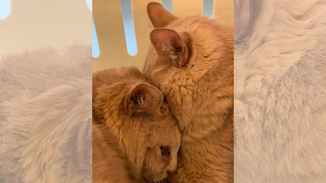 Donations pour in after SCRAPS rescues 43 cats in cruelty case
