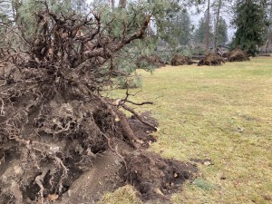 Downed trees in Comstock Park