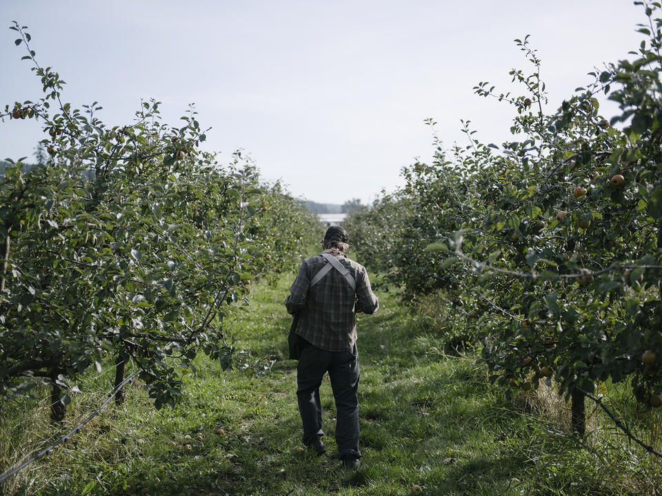 Cider Climate In Text 7